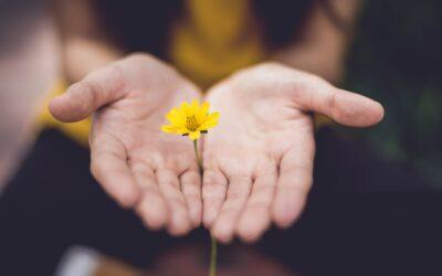 Die Hoffnung ist ein langlebiges, zähes Biest